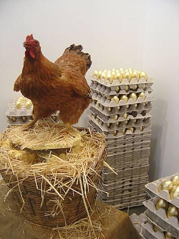 albarracin Laying hen 2006.jpg
