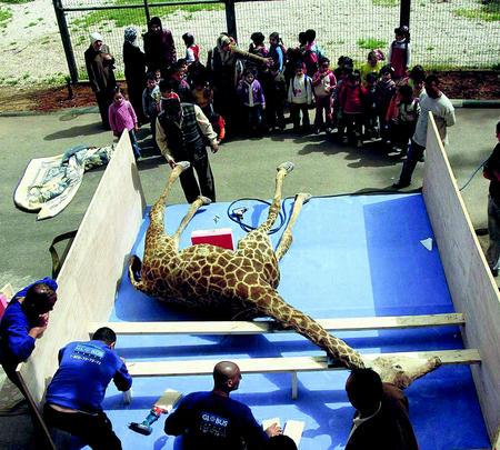 friedl-doc-giraff.jpg